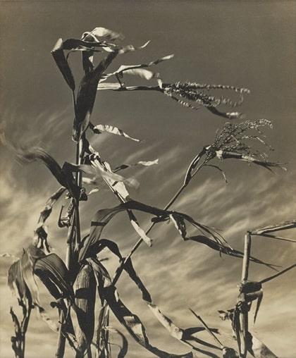 Wind (Motion) Dennis K. Chin 1939