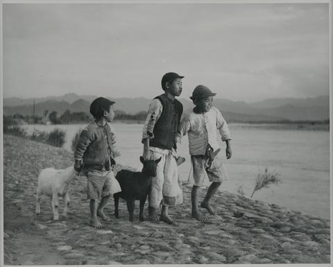 典藏圖片 - 牧羊童