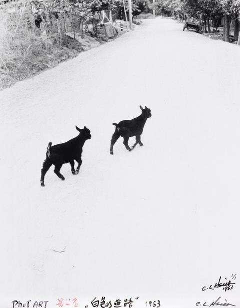 典藏圖片 - 白色的路