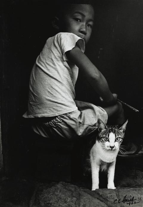 典藏圖片 - 少年與貓